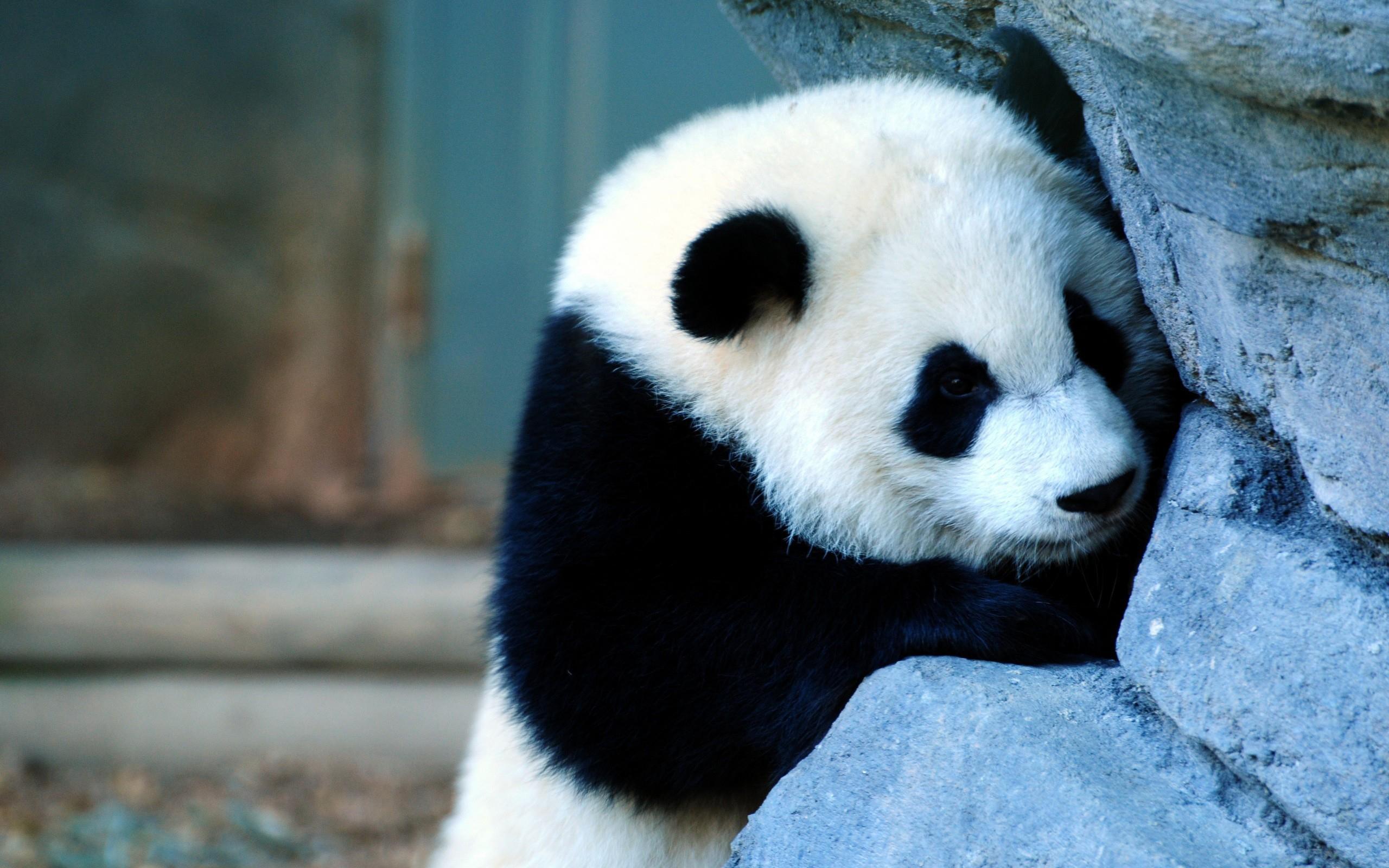 Ehentai wow panda gif nude pic