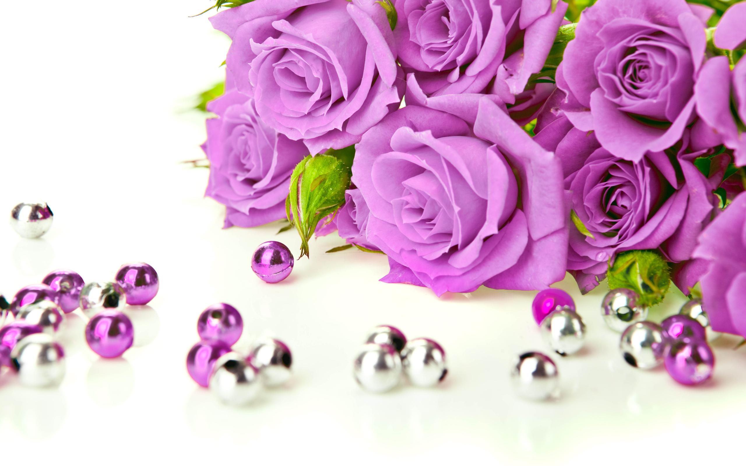 Про новогодние, картинки фиолетовые розы на белом фоне