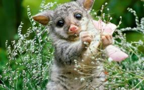 Playful Lemur