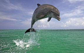 Красавец дельфин