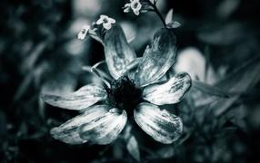 Black-and-white flower