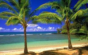 Пальмы, остров, пляж