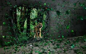 Тигр за стеной