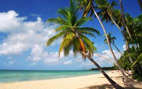 Пляж,пальмы