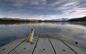 Dog staring at a lake