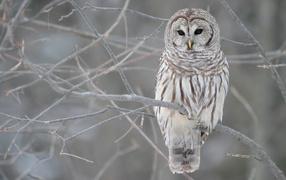 Серая сова на дереве
