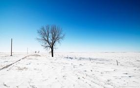 Одинокое придорожное дерево