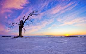 Сухое дерево зимой