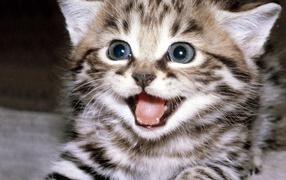 Полосатый усатый кот