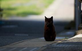 Black Cat hypnotizes photographer