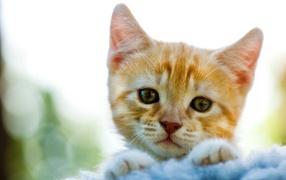 Милый рыжи котик
