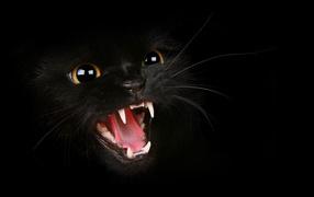 Fangs black cat