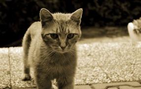 Серый кот с белыми усами