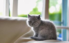 Grey little frightened cat