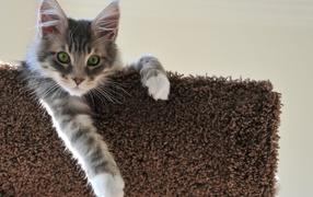 Kitten swung paw