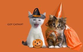 Kittens in festive costumes