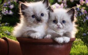 Two kittens in a flower-pot