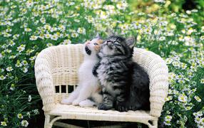 Котята на стуле в цветах