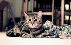 Полосатый котик
