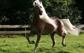 Лошадь домашняя