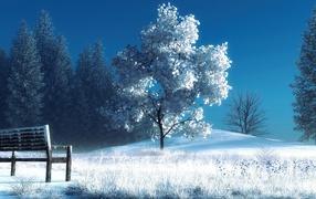 Снег, Деревья, Скамейка, стиль