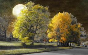 park, Trees, Moon, Street, Copyright