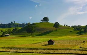 Harvest fields