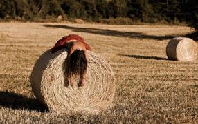 Field, Grass, lies, July