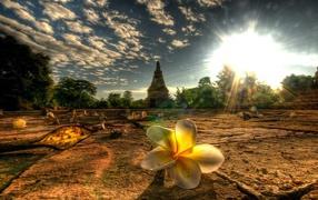 Flowers Thailand