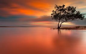 Дерево на затопленном острове