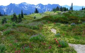 skyline, landscape, wildflowers