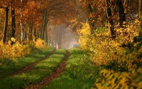 Заросшая дорога в лесу