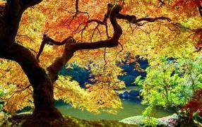 Под кроной дерева