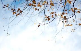 Фоновый рисунок осень