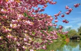 Весна пришла природа расцветает