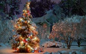 Новогодняя елка в ночном лесу
