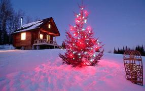 Колючии иголки на новогодней елке