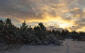 Закат в молодом лесу