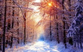 Морозное утро в лесу