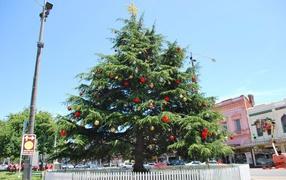 Красивая Новогодняя елка в жаркой стране