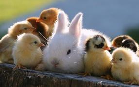 Кролик и цыплята