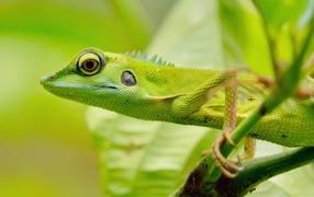 Зеленый зверь в джунглях