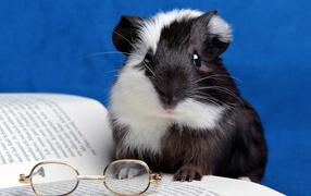 Хомячок с книгой