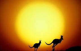 Кенгуру на фоне солнца