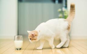 Кошка и стакан с молоком