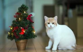 Кот празднует Новый год