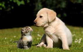 Котенок и щенок на траве