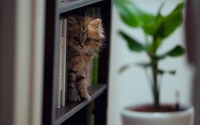Котенок на полке