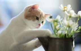 Котенок играет цветками