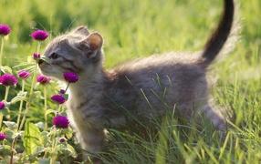 Котенок нюхает цветы